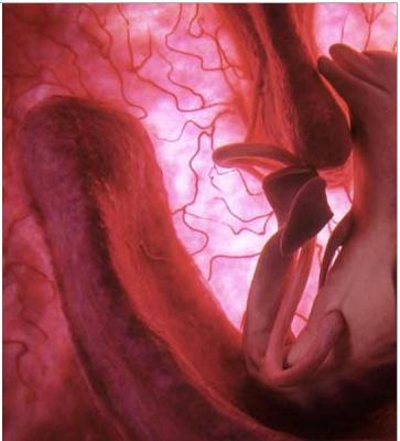 تصرفات الجنين داخل الام عالم