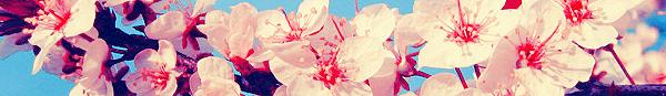 هيدرات زهور للمسن
